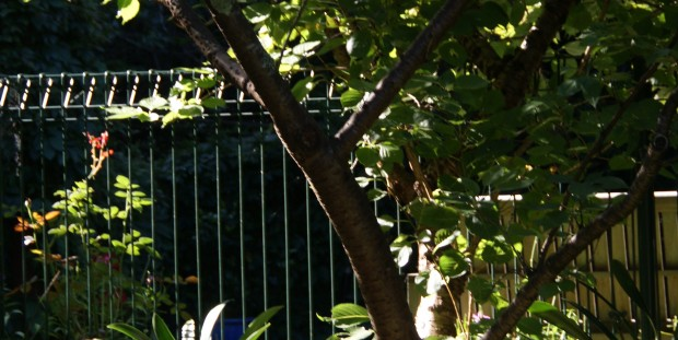 Overleaf Park Orchards 7
